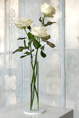 Amaryllis Vase mit Rose