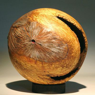 """""""Terra incognita 010"""" chêne - 32 cm - 2008"""