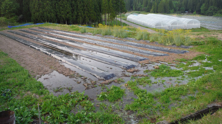 畑に水が染みていきます。