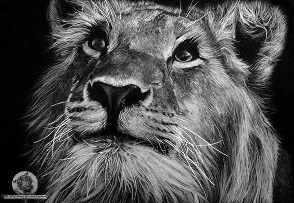 Le jeune lion1
