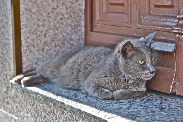 Gato de Villanueva del Rey.