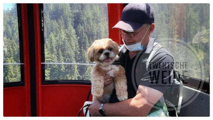 erkende fokkers van boomer hondjes