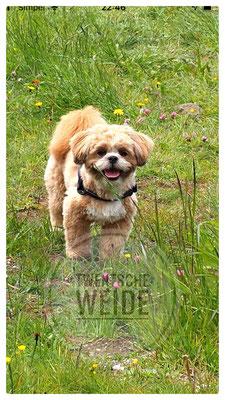 Fokker volgens dierenwelzijn gezonde boomer pups