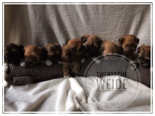 Fokker van boomer pups