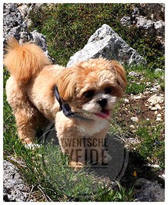 boomer puppy