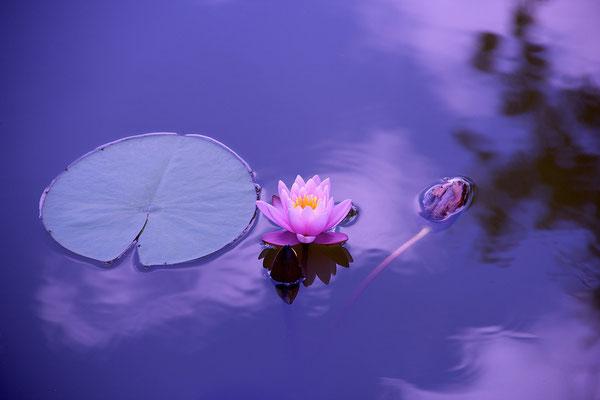 Bewusstsein Lebensgesetze verstehen Seele baumelt