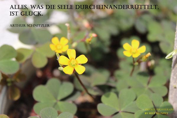 Artur Schnitzler Zitat,Zitate, Leben, Nachdenken, Seele baumelt, Seele baumeln lassen, Ganzheitliche Gesundheit