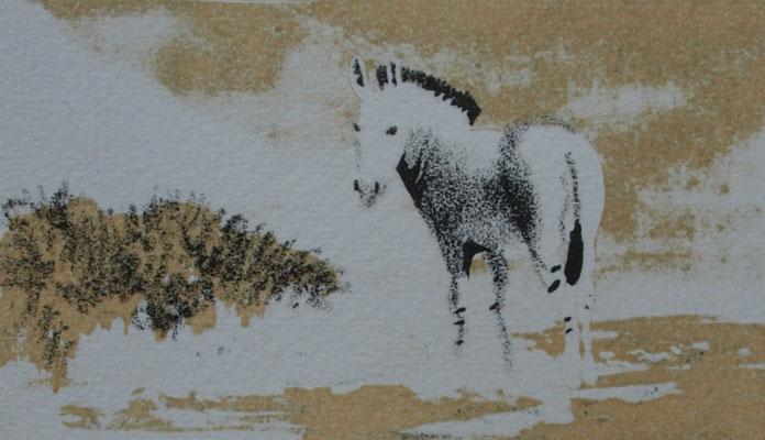 Afrikaanse wilde ezel 7x12cm, litho oplage 30