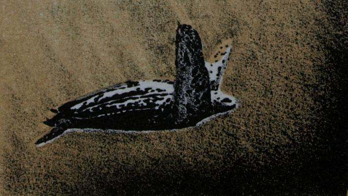 Lederschildpad 7x12cm, litho oplage 30