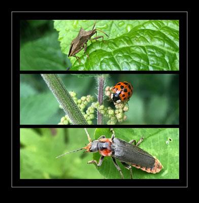 Käfer und Insekten, Schweiz 2021