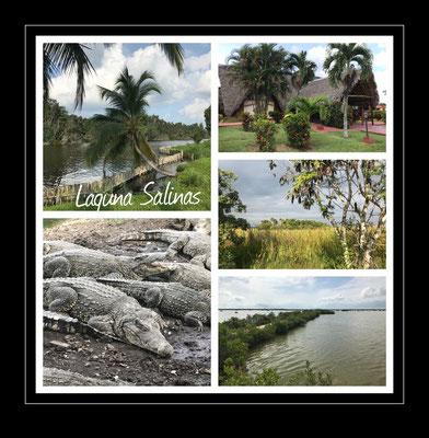 Laguna Salinas, Kuba  2019