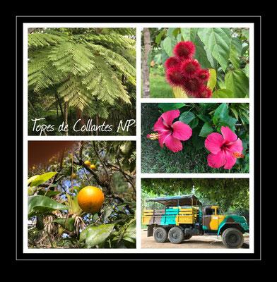 Topes Collantes NP, Kuba  2019