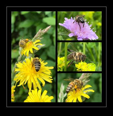Bienen, Schweiz 2021