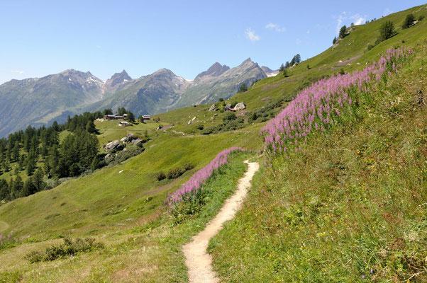 Vielfältige Wandermöglichkeiten, Wanderwege im Sommer