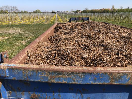 organisch verhakseld snoeiafval wordt verspreid tussen de wijnranken: bemesting & waterhuishouding