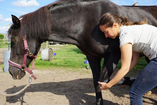 Osteopathin für Pferde bei einer 3-D- Mobilisation des Voderbeines