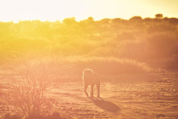Spaziergang der Sonne entgegen