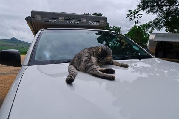 Die Katze ist wohl auch grosser Heinz-Fan