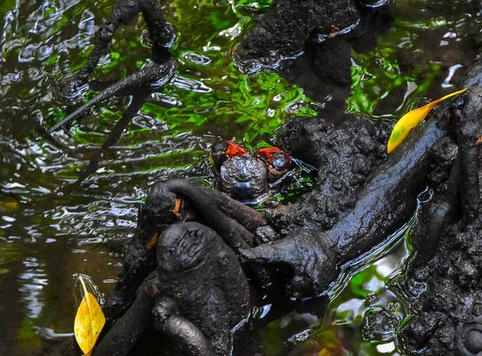 Jozani Forest - Mangrovenwald