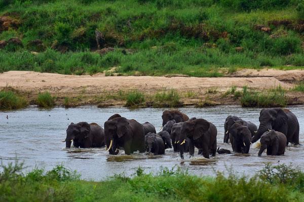 Bade-Elefanten