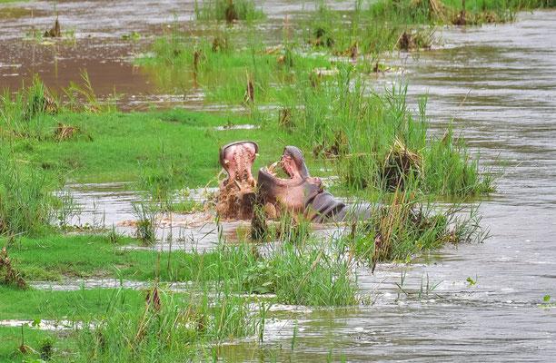 Hippo Streit