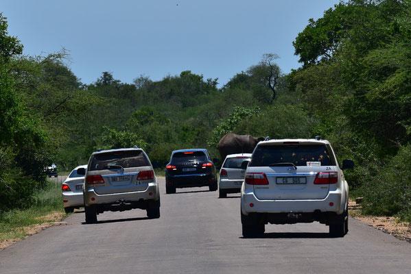 Stau wegen Elefanten-Roadblock