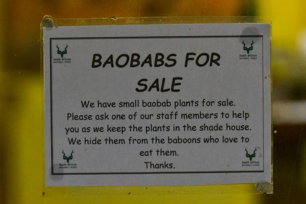 Baobabs zu kaufen in der Skukuza Nursery