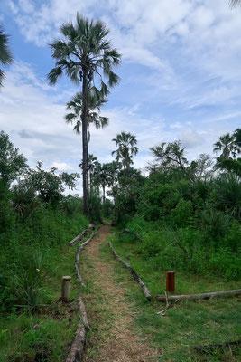 Wege im Camp