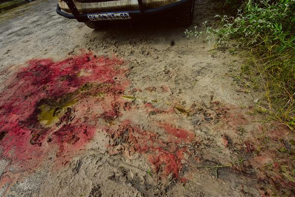 Die Spuren sind noch gut sichtbar, im Gras daneben lagen weitere Überreste