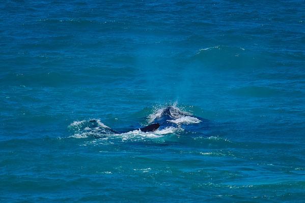 Wale in De Hoop
