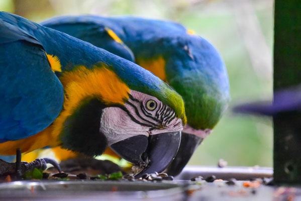 Viele der Vogelarten im Birds of Eden sind nicht heimisch im südlichen Afrika