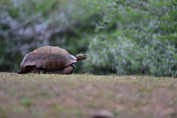 Schildkröten haben Vorfahrt