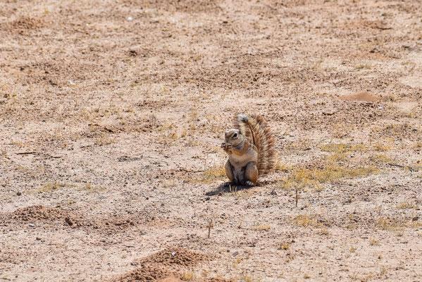 Den eigenen Sonnenschirm immer dabei - Ground Squirrel