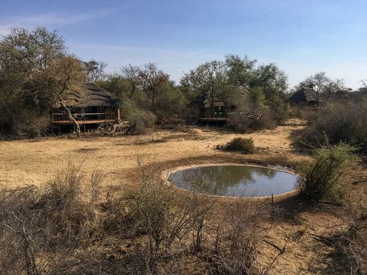 Das Wasserloch der Lodge, vom erhöhten Viewpoint aus gesehen