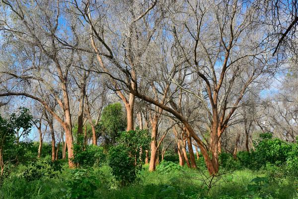 Pafuri Gebiet im Krüger