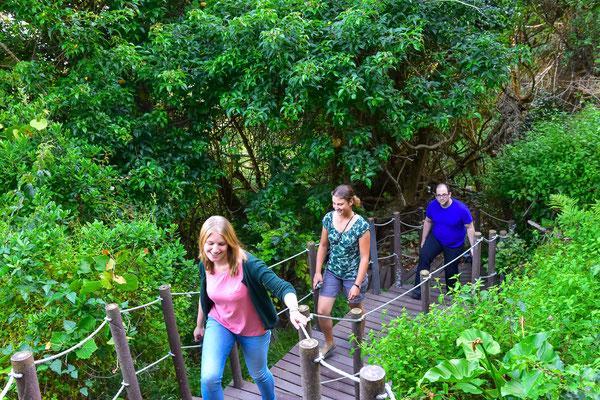 Munter entlang den Trails durch die Regenwälder