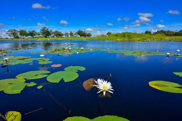 Wunderschönes Okavango Delta