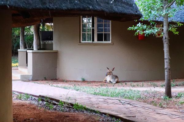 Ein Känguru oder doch eine Antilope? ;)