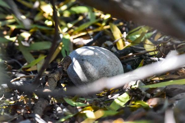 Ein Pingu-Ei entdeckt
