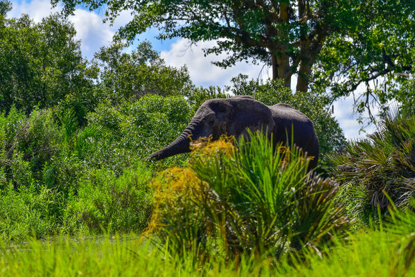 Vereinzelt Elefanten gibt es auch!