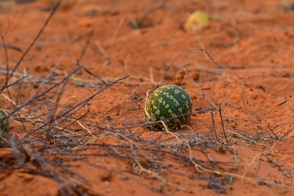Tsamma-Melons