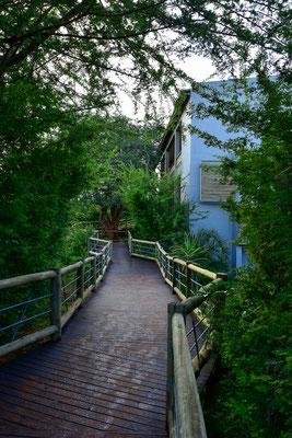 Holzpfad zu den Zimmern der Chobe Bush Lodge