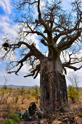 Mittagspause am Baobab