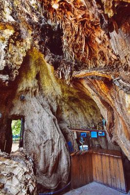 Inkl. Bar im Inneren des Baums