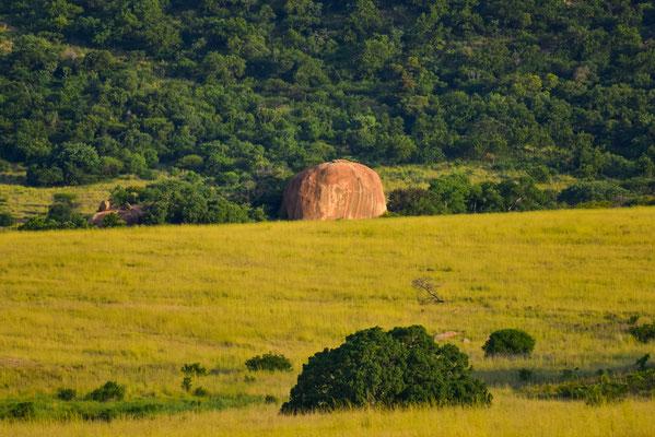 Viele einzelne Felsblöcke im Reserve