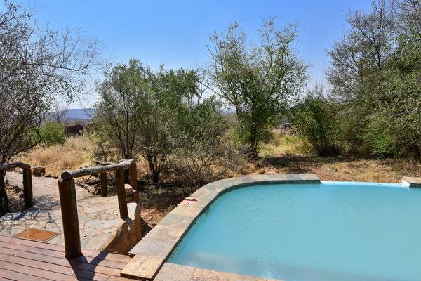 Elefantenbesuch beim Pool vor der Hütte