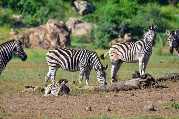 Mapungubwe Nationalpark