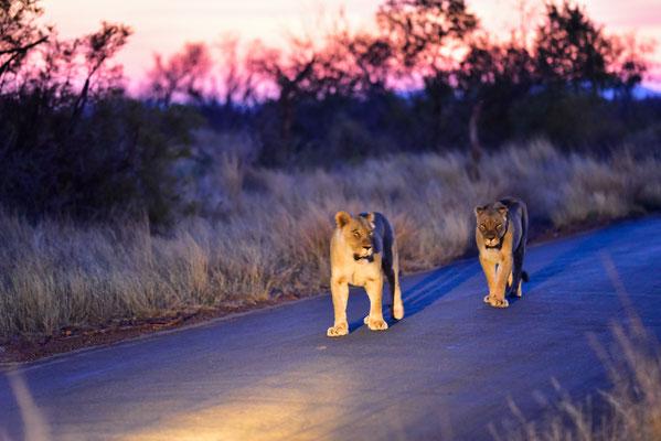 Inklusive Anhang, deutlich motivierter und vorausgehend was die Jagd angeht