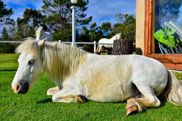 Pony Marshmellow