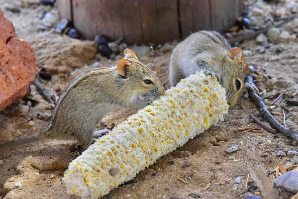 Mittagessen auf dem Picknickplatz auch für die Mäuse